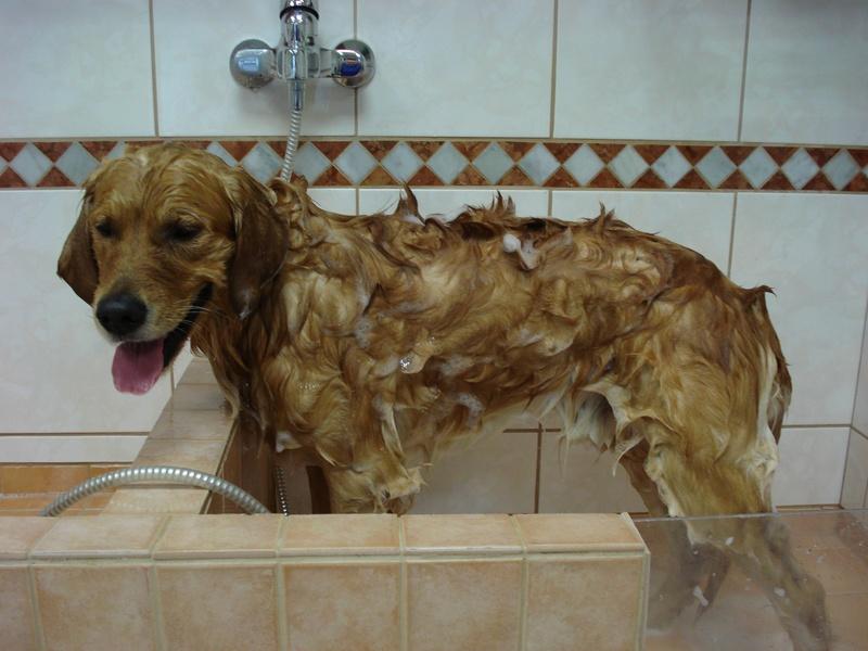 Bodie lekker in bad.